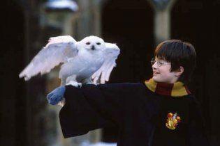 Из-за Гарри Поттера в Индии гибнут совы