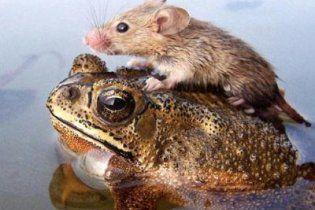 Найкращими ліками від імпотенції визнано сік із мишей і коктейль із жабок