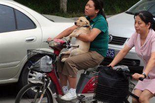"""В Шанхае введут закон """"одна семья - одна собака"""""""