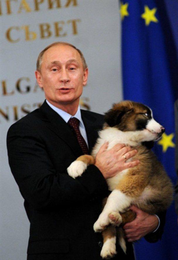 Блогеры предложили Путину назвать щенка Азаровым
