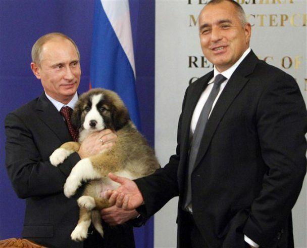 Путін оголосив конкурс на ім'я для свого цуценяти