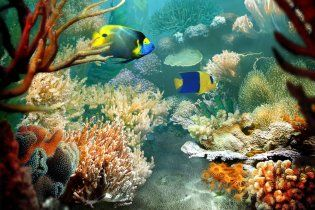 Вчені розгадали секрет тропічних риб