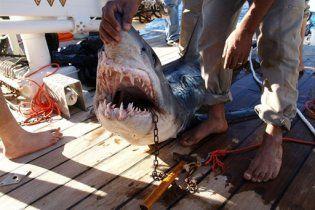Новое нападение акулы-людоедки в Египте - погибла туристка из Германии