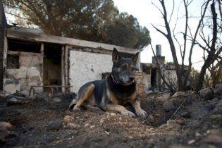 Пожежники ліквідували лісову пожежу в Ізраїлі