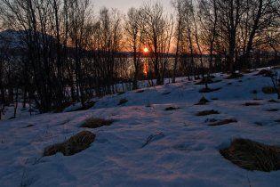 У Швеції жінка одним пострілом убила лося і лижника