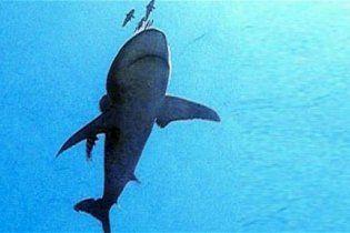 Италия предложила Египту электромагнитный щит от акул