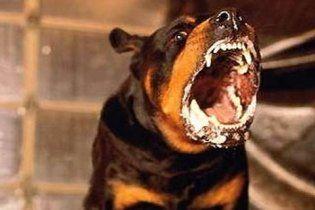 В Кировоградской области бешеный пес покусал 9 человек