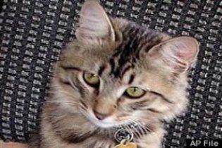 """Кот, пропавший пять лет назад во время урагана """"Катрина"""", вернулся домой"""