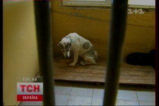 Киевляне покупают элитных собак и выбрасывают их на улицу