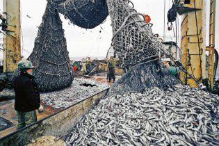 В Черном море осталось только три вида рыб