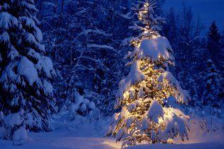 На Новий рік можна випадково придбати ялинку з Чорнобилю