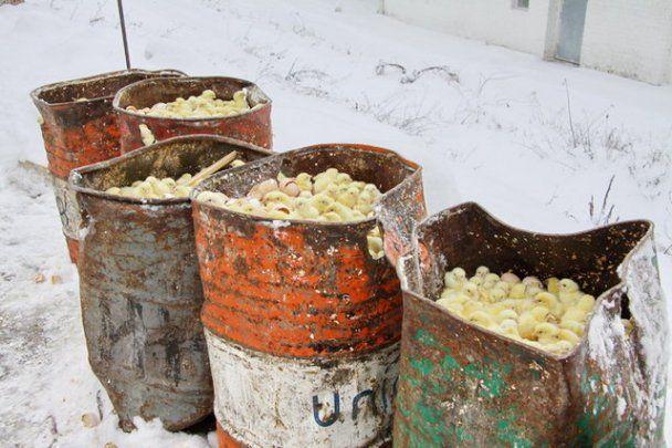 У Росії 300 тисяч курчат-бройлерів викинули гинути на мороз