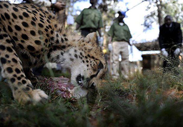 У притулку для диких тварин відзначили Різдво