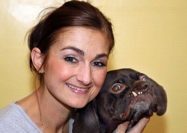 Найпотворніший собака Британії знайшов собі господаря
