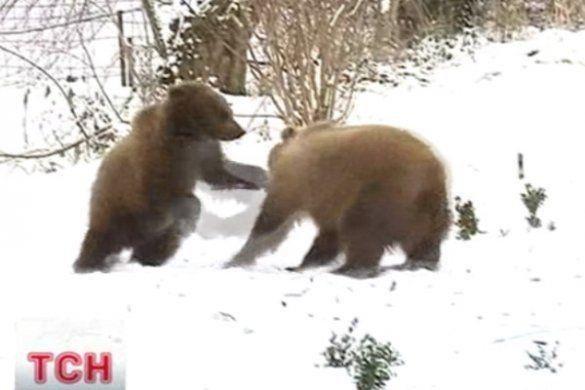 Медведі