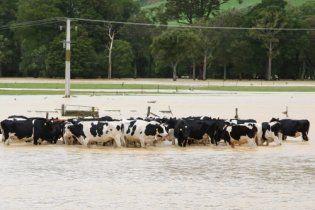 Ливни вызвали сильнейшее за последние 150 лет наводнение в Новой Зеландии