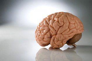 """Сховища пам'яті в головному мозку побудовані з нейронних """"цеглинок"""""""