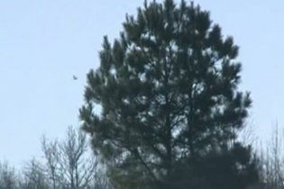 В американском штате Арканзас выпал дождь из мертвых дроздов