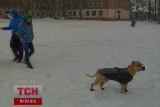 У Чернівцях живе єдиний в Україні пес-паркурист