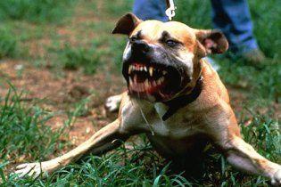 За рік у Києві собаки покусали 4,5 тисячі людей