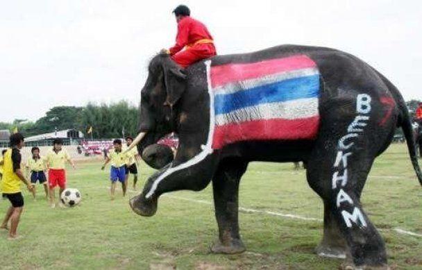 В Непале слоны сыграли в футбол, забив несколько голов (видео)