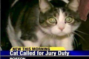 Кота вызвали на суд в качестве присяжного