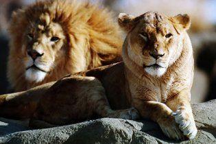 В зоопарке Тегерана убили 14 львов