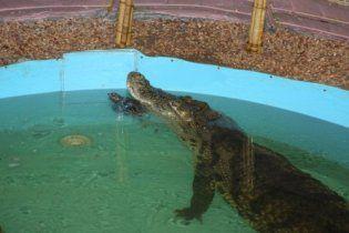 В Днепропетровске крокодил, который проглотил мобильник, голодает уже больше месяца