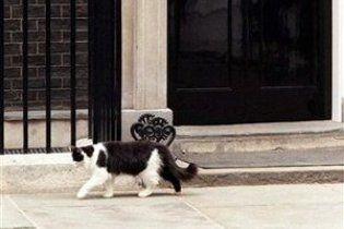 Через нашестя пацюків у резиденції британського прем'єра заведуть кота