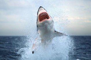Ученые отмечают рост агрессии акул с каждым годом