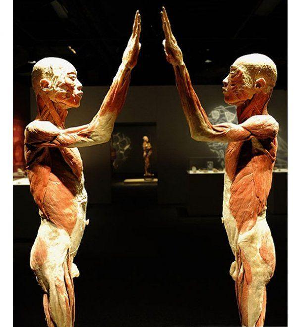 Обновленная выставка трупов в Нью-Йорке