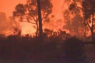 Лісові пожежі на заході Австралії вийшли з-під контролю