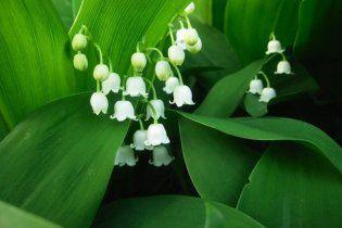 Весна в Україні настане на тиждень раніше, ніж зазвичай
