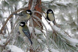 Погода в Україні на п'ятницю, 26 лютого
