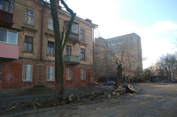 В Николаеве ураган срывал крыши и ломал деревья