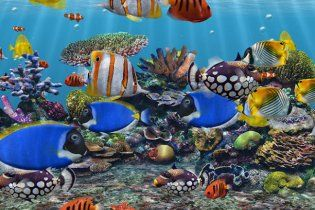 Однорічна дівчинка втопилася в акваріумі, поки батьки курили