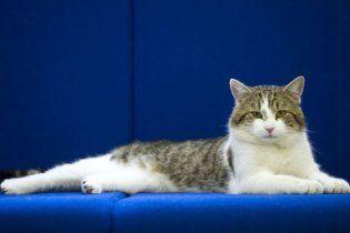 У британського прем'єра з'явився новий співробітник - кіт Ларрі