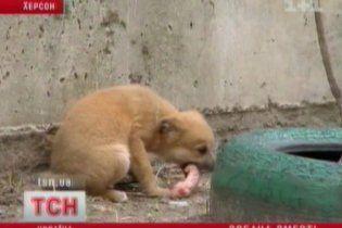 У Херсоні розстріляли близько сотні безпритульних собак