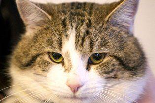 Кот пронес в тюрьму мобильник в пакете с макаронами