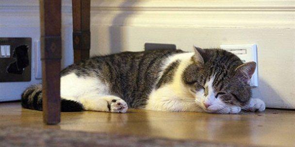 Хвостатий співробітник британського уряду кіт Ларрі