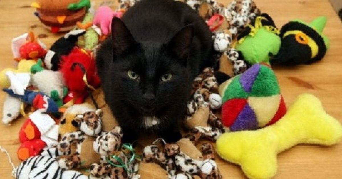 Indoor cat looking for home