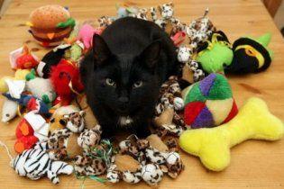 Кот-клептоман на радость хозяевам по ночам грабил своих соседей (видео)
