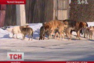 На Черниговщине бешеный щенок переполошил всю школу: 22 ребенка в больнице