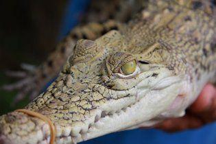 У Севастополі відкриють крокодилячу ферму