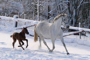 """У Росії в рамках """"боротьби з чумою"""" на очах у дітей спалили коней і розстріляли собак"""
