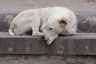 Возле памятника жертвам Голодомора в Киеве начали травить собак