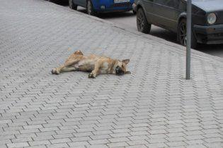 В Полтаве травят бездомных собак: животные умирают в страшных муках