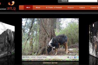 В інтернет виклали понад 200 тисяч фотографій рідкісних тварин