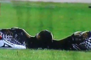 Разъяренный футболист насмерть забил сову во время матча (видео)