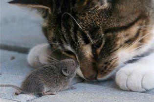 Нейрофізіологи навчилися робити з боязких мишей хоробрих